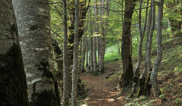 I materiali naturali del sistema costruttivo Woodbau